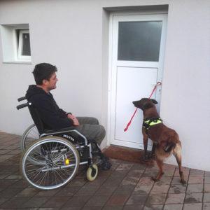 Pes pomočnik